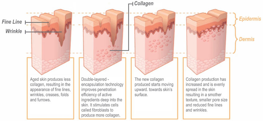 stem cell skin care rejuvenation